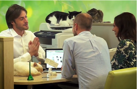 A Russian bank loans cats for good luck