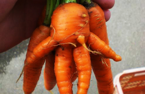 Japanese farmers name their misshapen veg