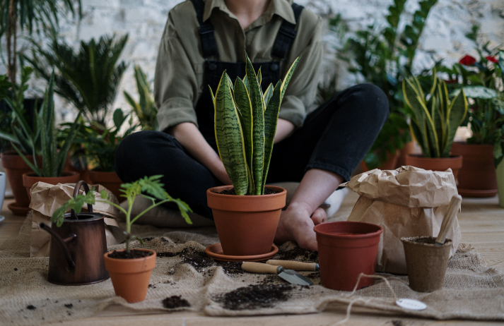 Rare plants give low-key luxe buyers a thrill