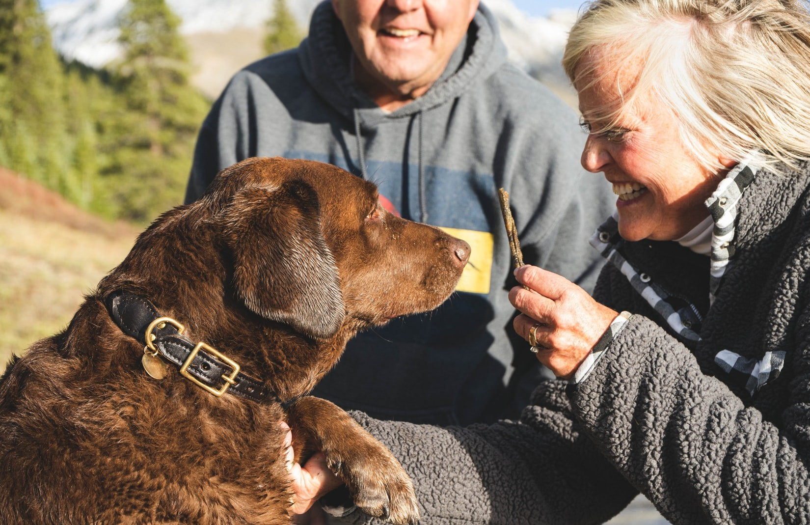 Pet brand taps eco values with plant-based dog food