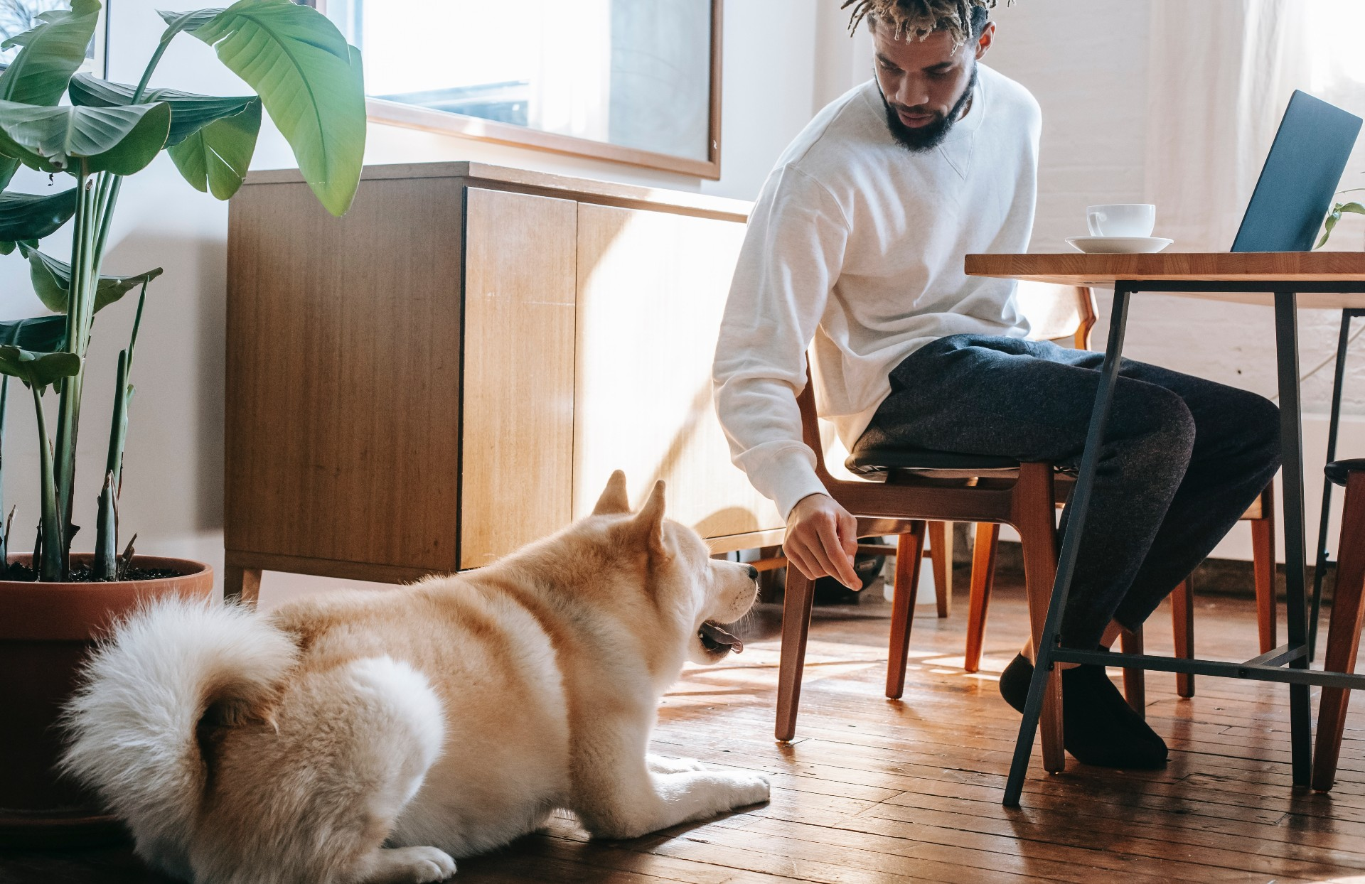 People are forking out to boost their pets' wellbeing