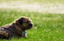 Pedigree uses mobile ads to find lost pets