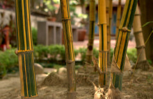 Bamboo is the new eco material of choice