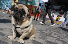 Premium pet care booms in China