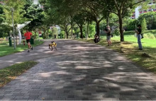 AI dogs help Singapore enforce social distancing